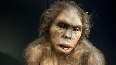 Recreación de Homo habilis (Museo de la Evolución Humana)